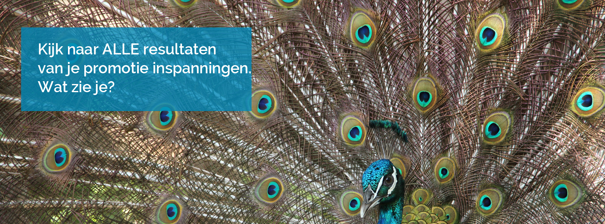 Content-marketing-wat-levert-het-op